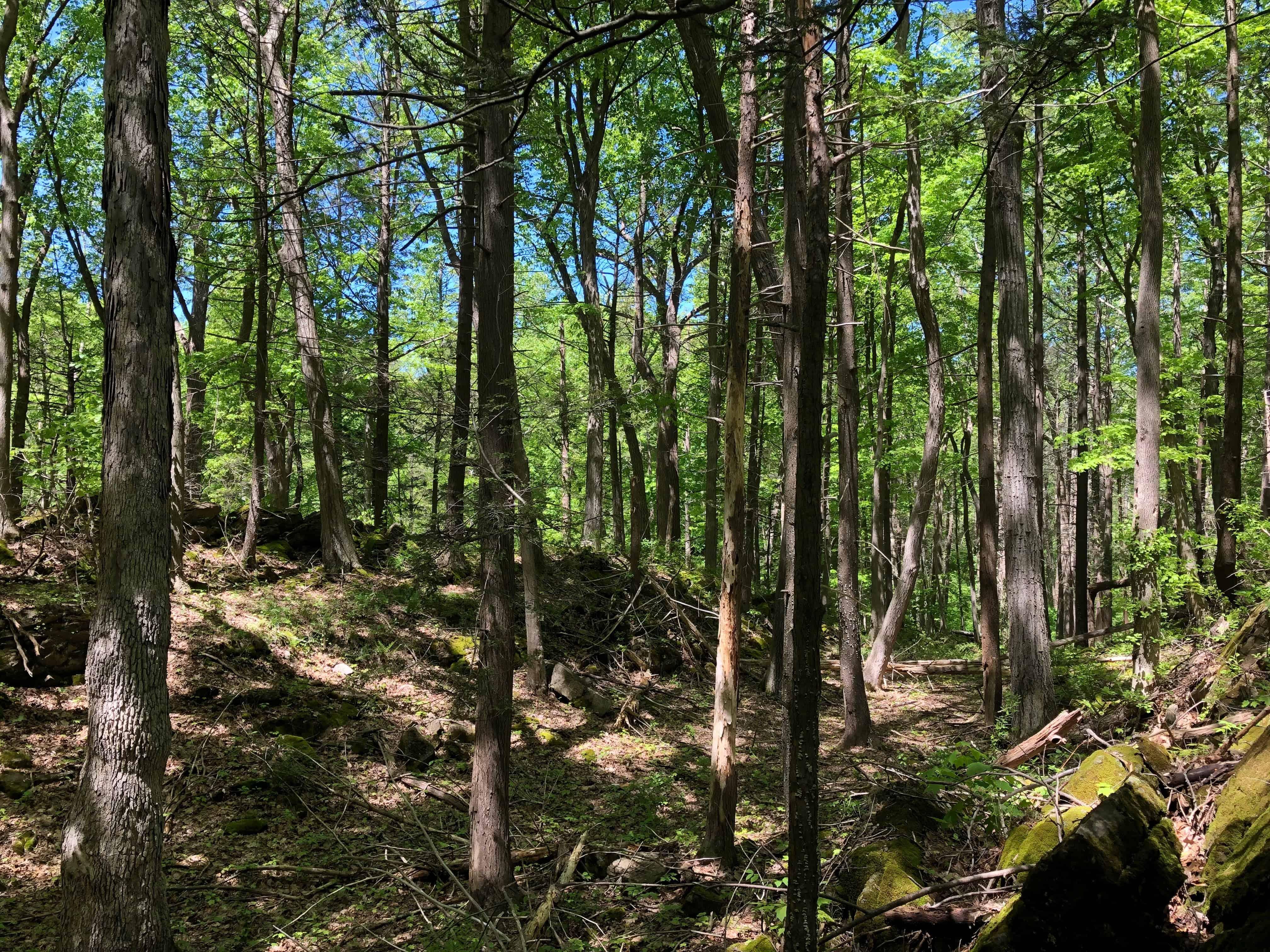 Kittatinny State Park
